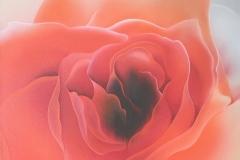 e uma rosa e uma rosa 70X70 2013